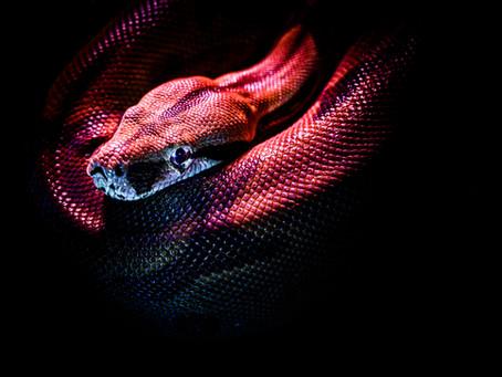 Snake Bit Business