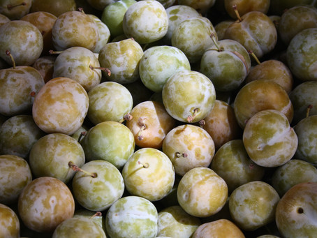 A lesson from the greengage tree