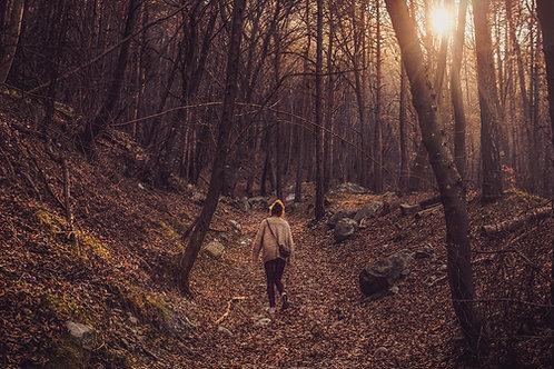 Walk in the woods Tealights