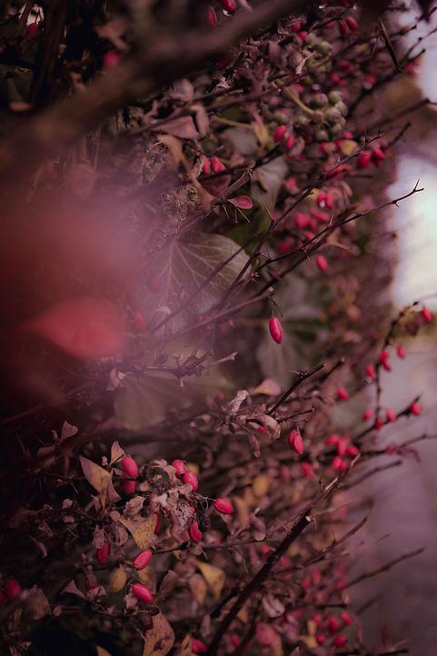 Image by Bianca Berg