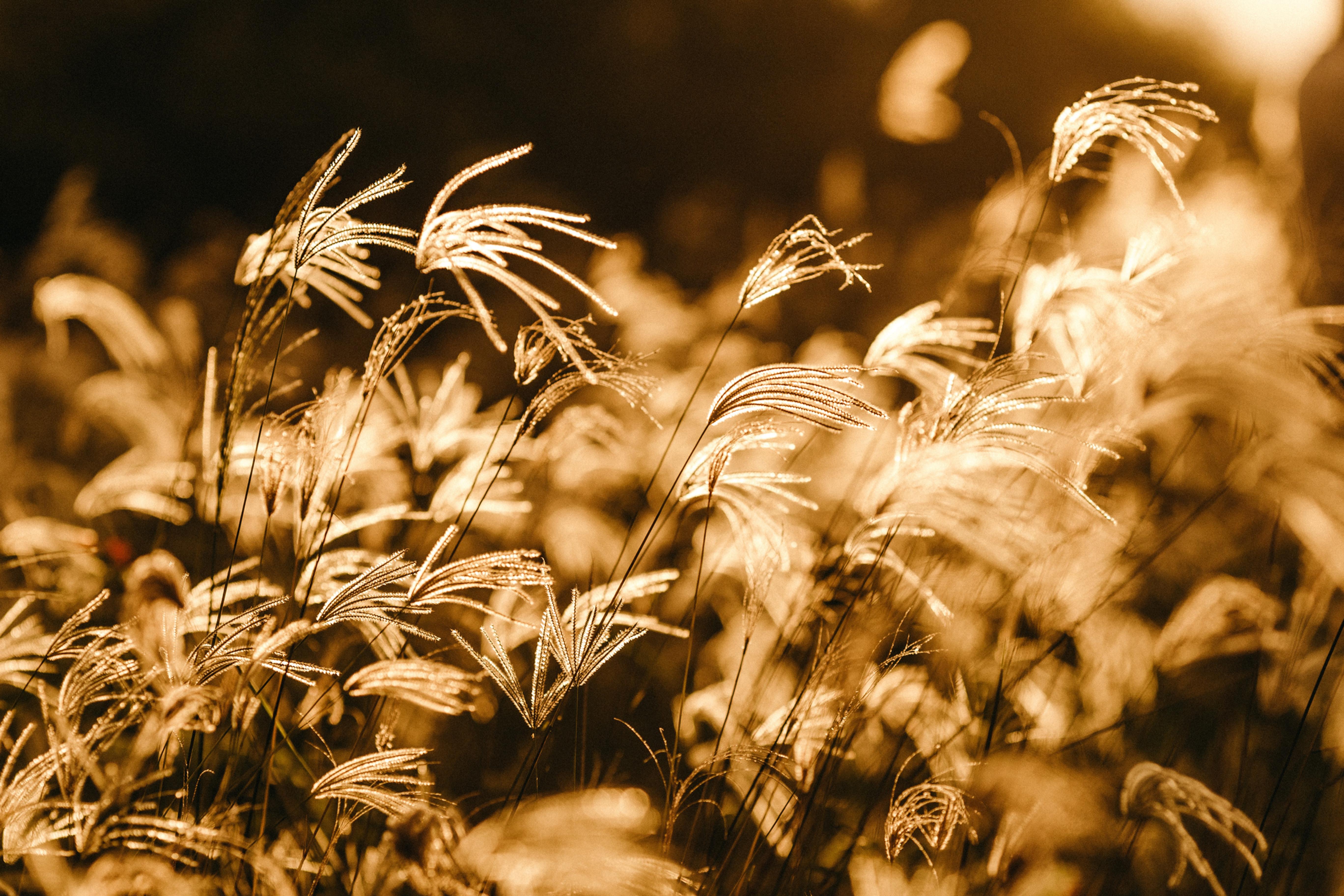 Golden Light Energy