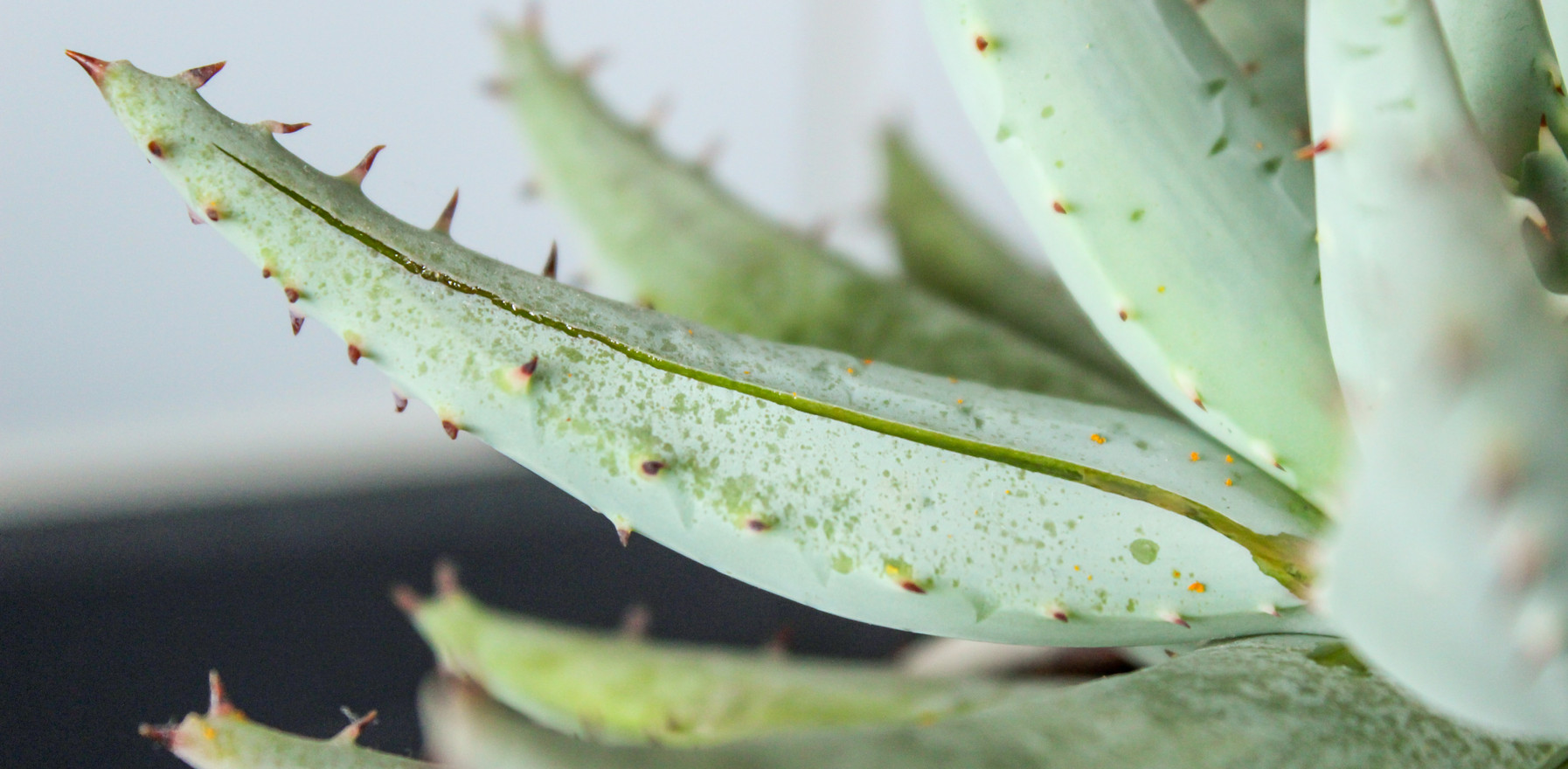 """""""Aloe Vera is Nature's Number One Remedy: Plants & Skin Care Series"""""""