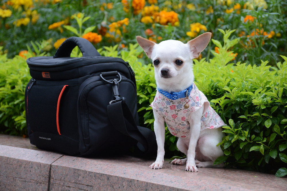 Travel hacks for pets carriers