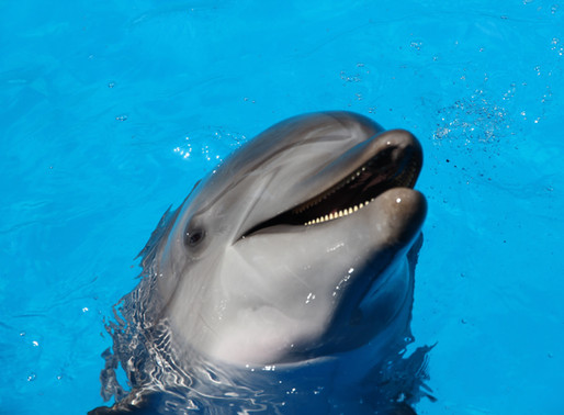 Ocean Park with Dolphin Encounter