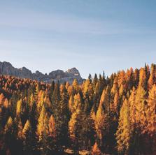 Fall Foliage's Scientific Roots