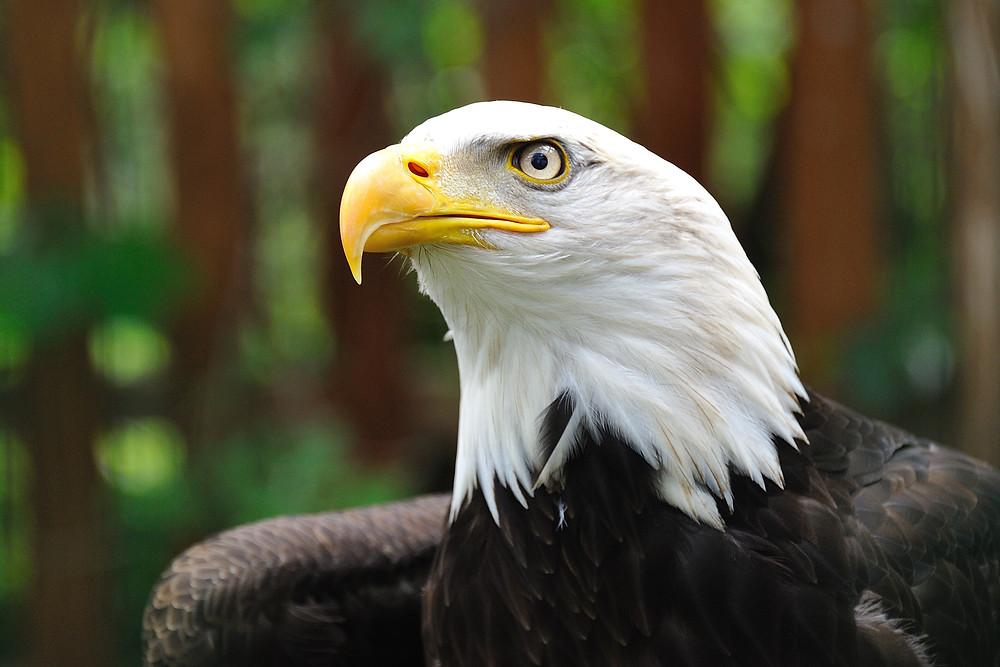 Wildlife lovers will enjoy the Lake Apopka Wildlife Drive near your Leesburg rental