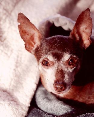 Older dog Image by Sharon McCutcheon