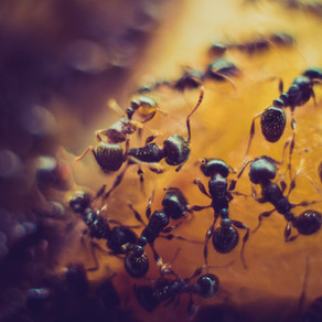 An Ant's Final Act by Melody Wang