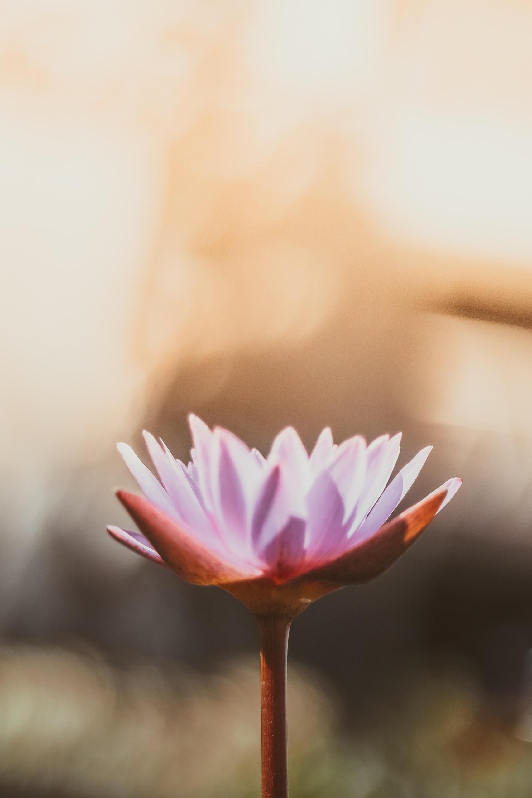 Restorative or Yin Yoga