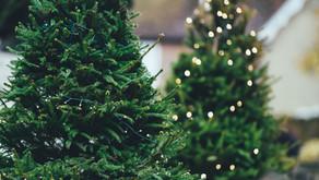 Christmas Tree Sale Begins 11/29