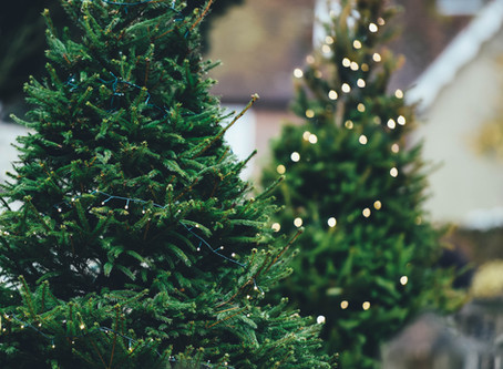 Wood Mites: Did Your Christmas Tree Bring Unwelcome Guests?