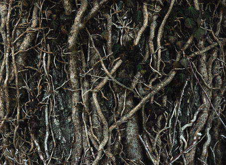 What are Mycorrhizae in Soil and Why Do they Matter?