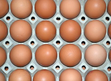Советская птицефабрика модернизировала галерею яйцесбора
