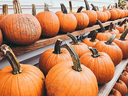 """Pumpkin Autumn Gold- 2.5"""" Pot"""