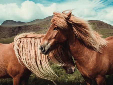 Vikingos y la expansión de caballos con aires especiales