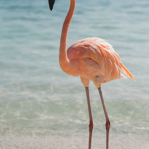 Be a flamingo: Stand out during student teaching