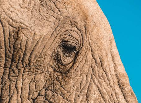 Se ami gli animali non fare tour con gli elefanti in Asia ma visita i santuari!