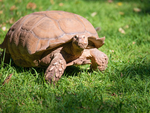 Did you ever have a tortoise for a pet?
