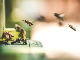 What is a pollinator species? How does pollination work?