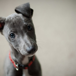 Ways to help your puppy with growing pains