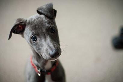 Welpenbegleitung Hundeschule Limmathunde