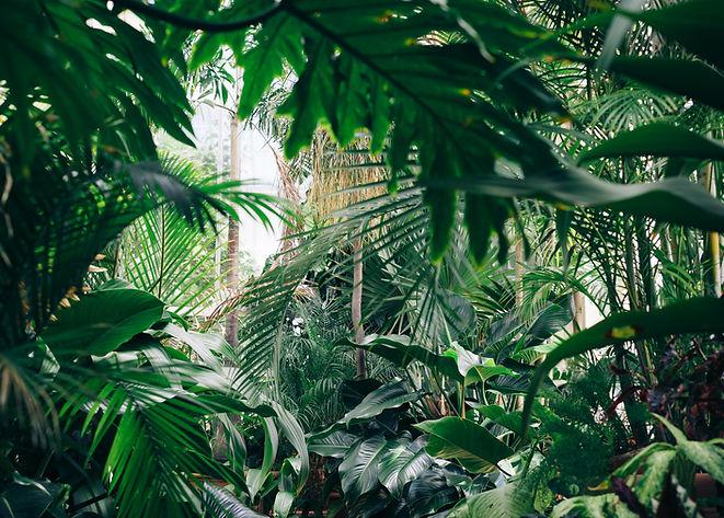 Palmių ir kitų egzotinių augalų pristatymas