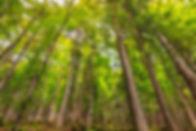 bonheur en fleur manon touati séjour bien-être alimentation saine jeûne intermittent méditation barbara peralta l'oustaou du lubéron aix en provence autoguérison santé maladie de crohn thyroidite d'hashimoto hypothyroidie ely killeuse oracles d'isa ateliers culinaires cuisine saine nature sud régénération maladies auto immunes chroniques inflammatoire naturopathie naturopathe thérapeute holistique psychomotricité psychomotricienne stress anti stress sylvothérapie massages ayurvédiques décodage biologique émotions
