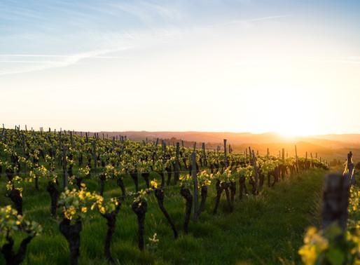 Quels sont les différences entre les vins Bio, en Biodynamie et les  vins conventionnels?