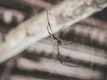 How To Tell If Spiders Around Your Phoenix Property Are Dangerous