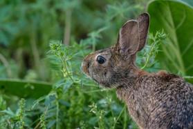 Wild Bunny Updates!