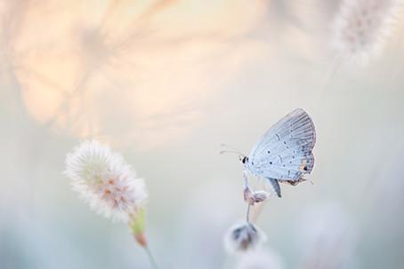 Eğer hayatında bir kelebek tanımak istiyorsan,