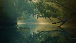 Aftermath of Climate Variability on Fragile Coastal Ecosystems: Case Study of the Indian Sundarbans