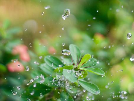 Vermikompostin käyttö orgaanisena hyönteisten torjunta-aineena