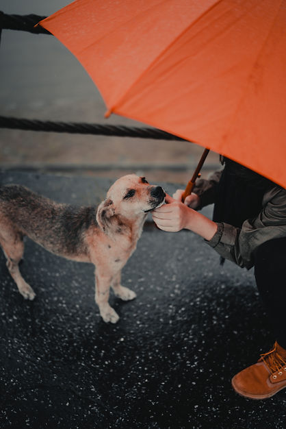 Dog with orange umbrella