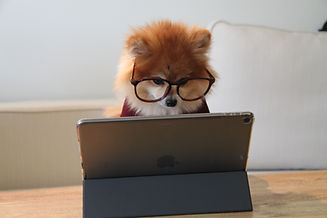 Pom on a laptop