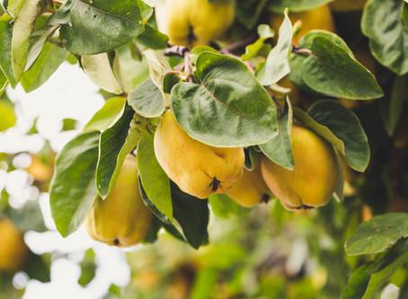 Bearing good fruit