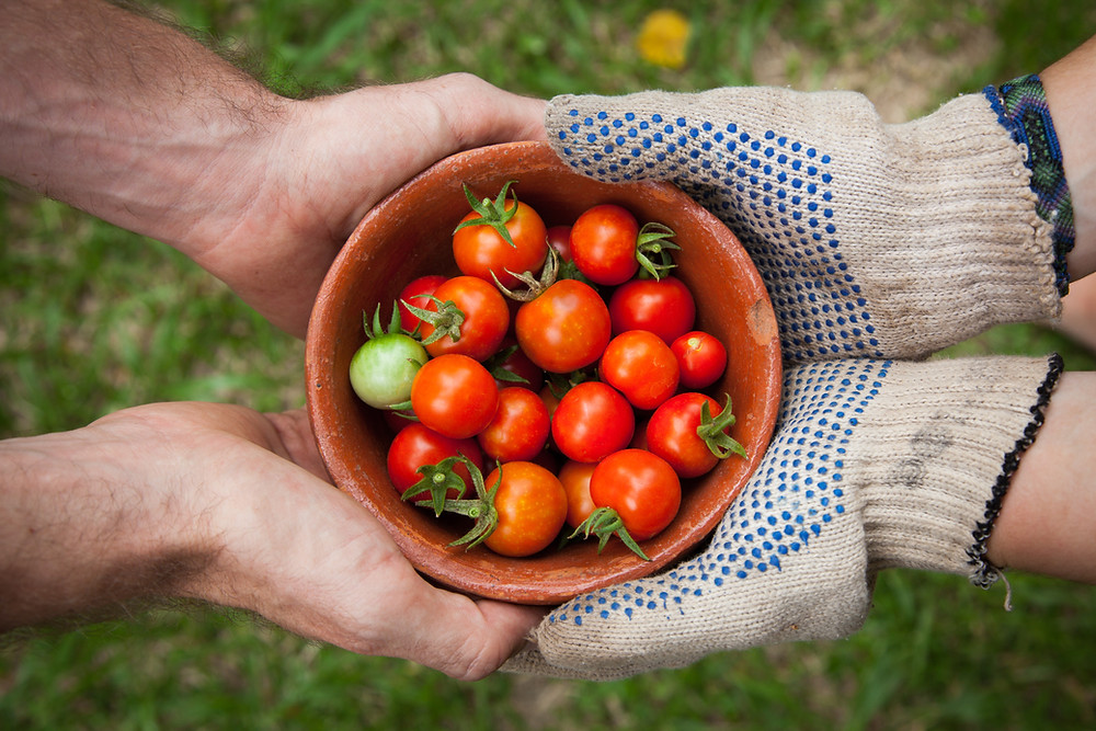 two set of hands holding a bowl full of tomatoes