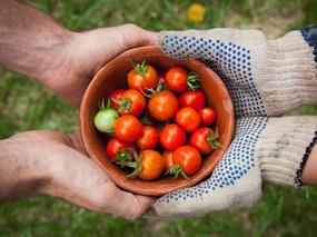 Elizabeth Collins: Food Futures