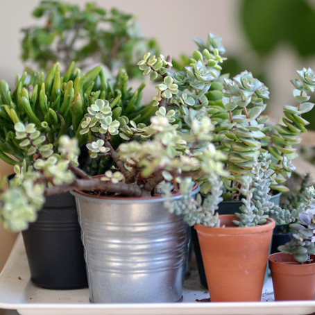 Three Types of Plants to Spruce Up Your Home!