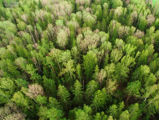 Investice podniků do klimatické tranzice prostřednictvím klimatických voucherů