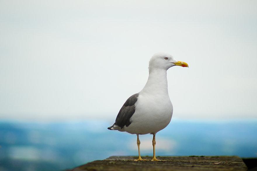 Seagull Recruiting