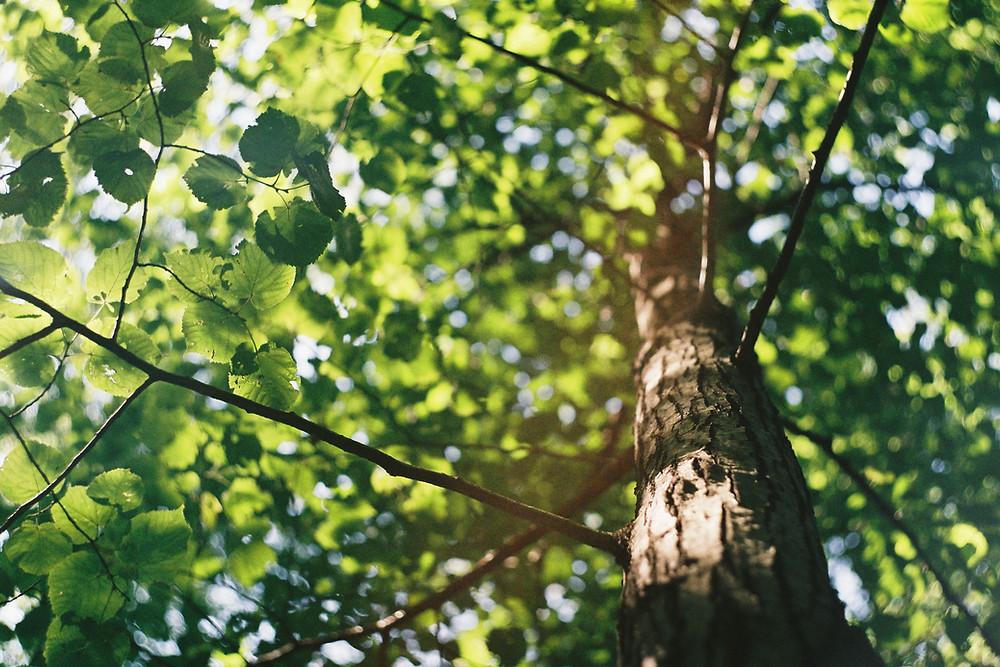 mastic pour les branches d'arbre