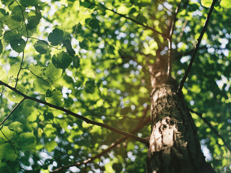 What can a tree teach us about confidence?