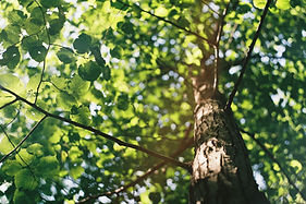 Tree leaves |  Counseling4Life, LLC | Counseling in San Antonio, Counseling in San Angelo, Counseling in Victoria, Texas | Anxiety, depression, trauma, faith based, panic, stress, anger, bereavement, couples, children, play therapy, Christian counseling