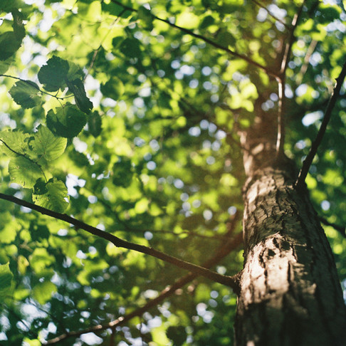 Sustainability 3 - Trees R Good
