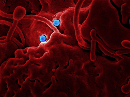 Is India ready for outbreaks like coronavirus ?