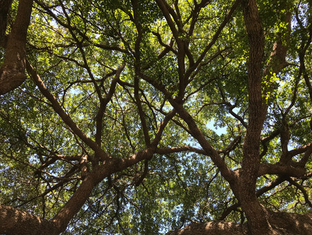 Common Florida Tree Pests And How To Manage Them