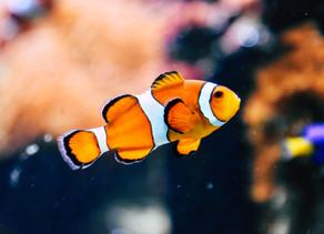 Cordados: Peixes