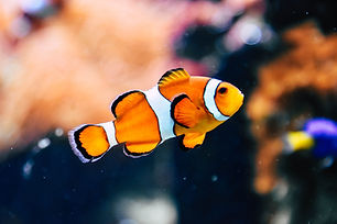 aquarium in austin tx Image by Rachel Hiskoin