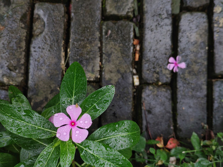 Love Grows in the Cracks